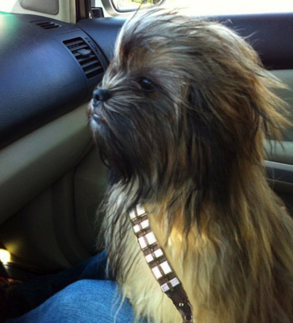 Chewbacca Dog | That Should Be Mine