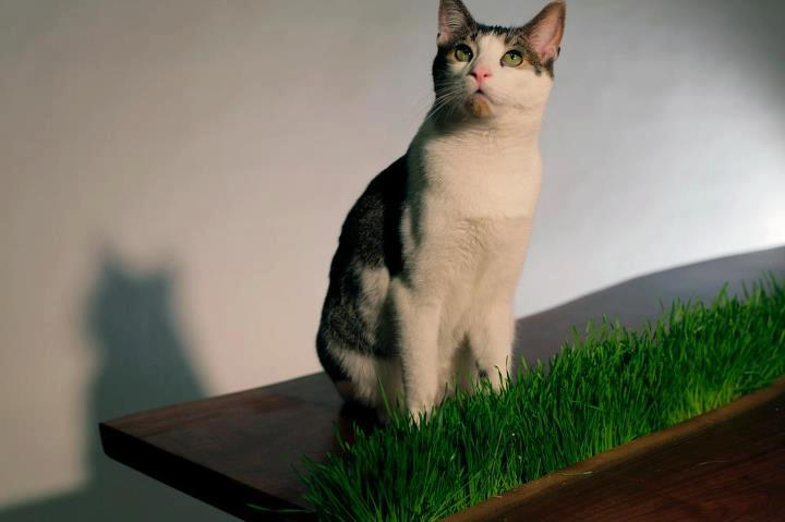 Cat Planter Table