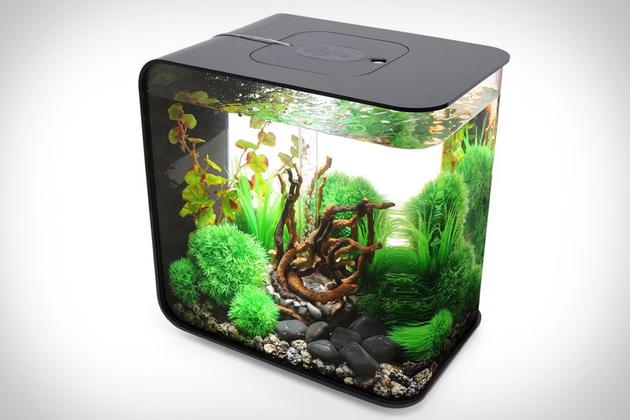 biorb-flow-aquarium